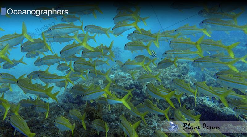 Oceanographers at Blane Peruns TheSea
