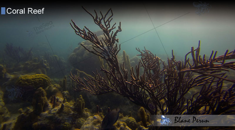 Oldest-Coral-Reef-Blane-Peruns-TheSea