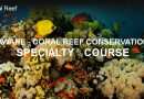 Padi Coral Reef Conservation