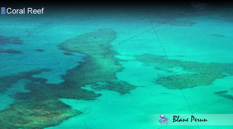 Patch Reef from Blane Peruns TheSea