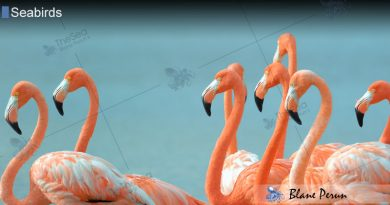 What Makes Flamingos Pink