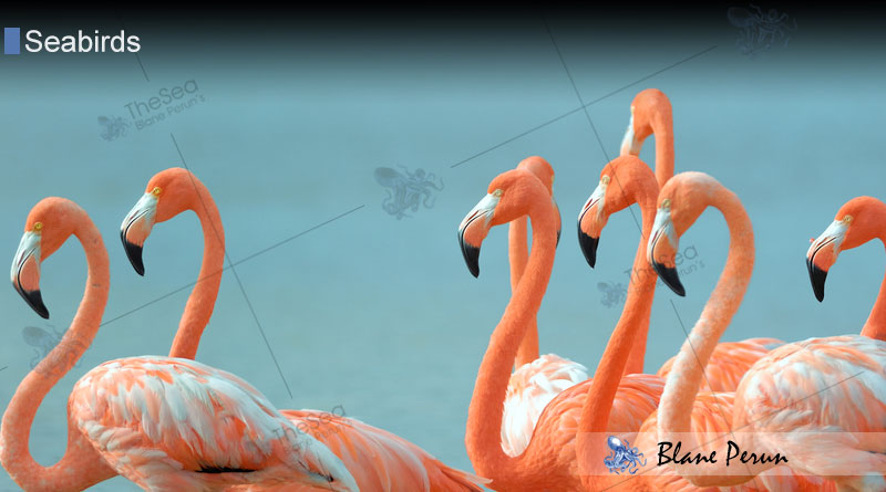 What Is It That Makes Flamingos Pink From Blane Peruns Thesea