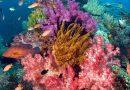 #9 Raja Ampat, Best Coral Reef Islands