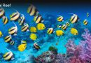 Red Sea Coral Reef Ecosystem