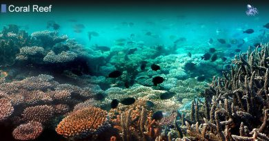 Coral Reef Flat