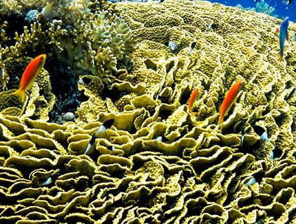 Scroll Coral from Blane Peruns TheSea