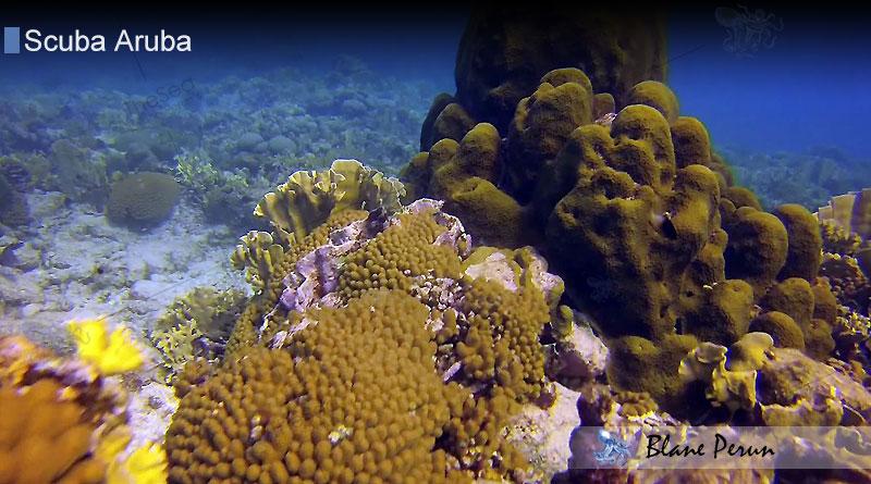 Scuba Diving Aruba 4/13