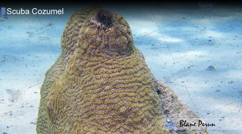 Scuba Diving Cozumel