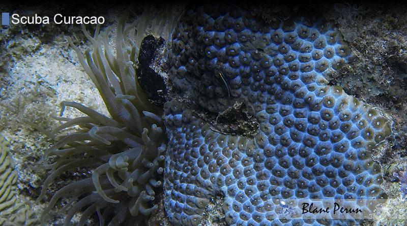 Scuba Diving Curacao 6/14