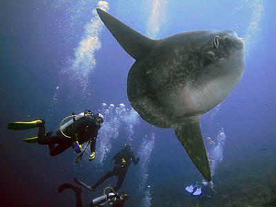 Scuba Diving Bali from Blane Peruns TheSea