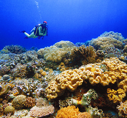 Scuba Diving Philippines from Blane Peruns TheSea