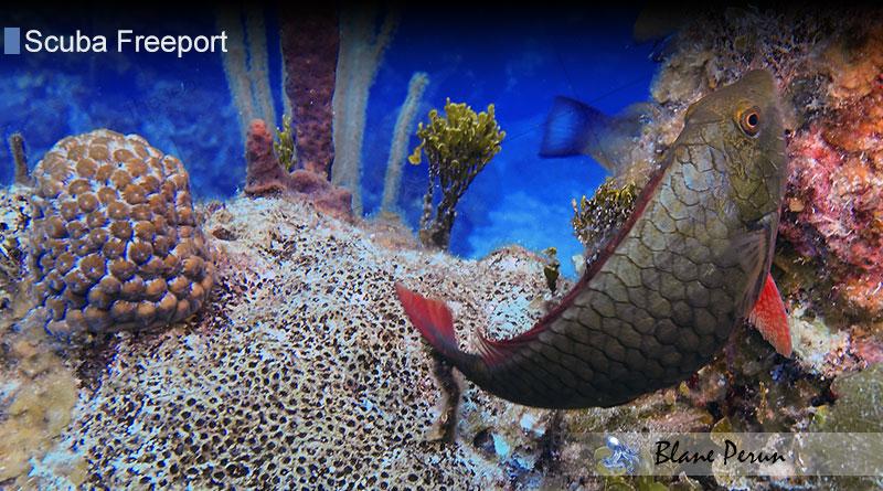 Scuba Diving Freeport 6/17