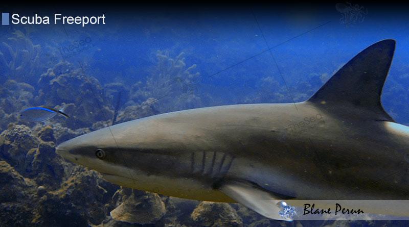 Scuba Diving Freeport