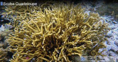 Guadeloupe Dive