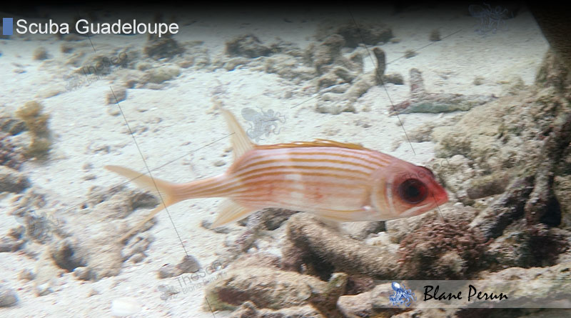 Scuba Diving Guadeloupe