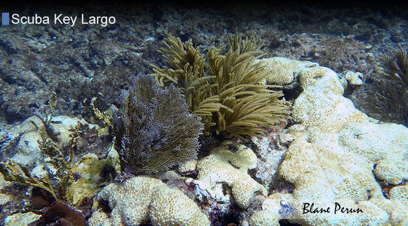 Scuba Diving Key Largo 9/19