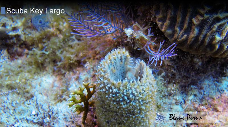 Scuba Diving Key Largo 3/15