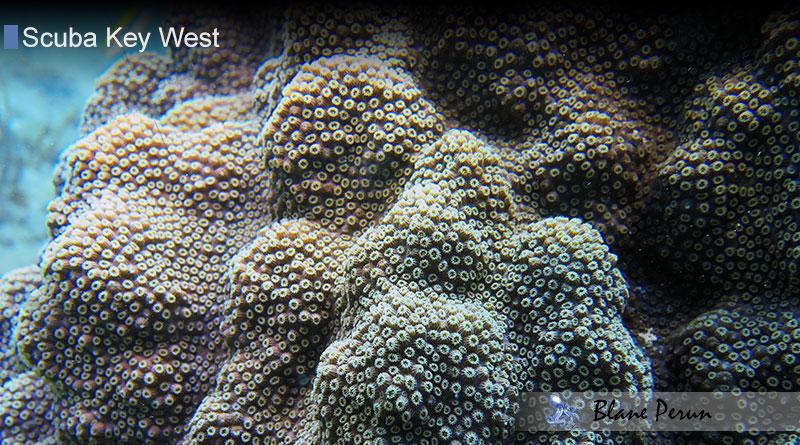 Scuba Diving Key West