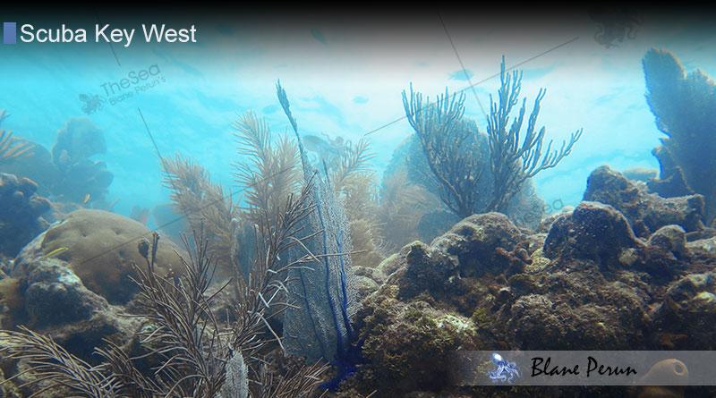 Scuba Diving Key West 8/16