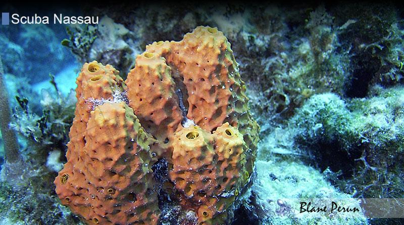 Scuba Diving Nassau 11/04