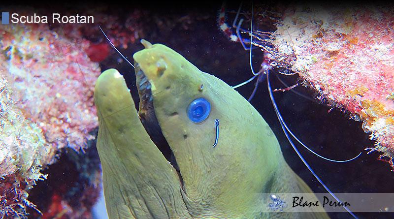 Scuba Diving Roatan 8/14