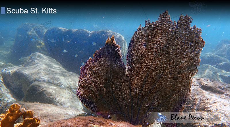Scuba Diving St. Kitts 11/17