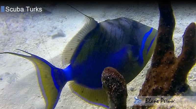 Scuba Diving Turks 12/13