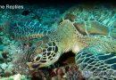 Sea Turtle Habitat