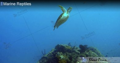 Sea Turtles Can Dive More Than 1000 Feet