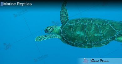 Sea Turtles Spend Their Entire Lives at Sea