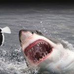 Sharks Bite 70 a Year We Kill 20 Million