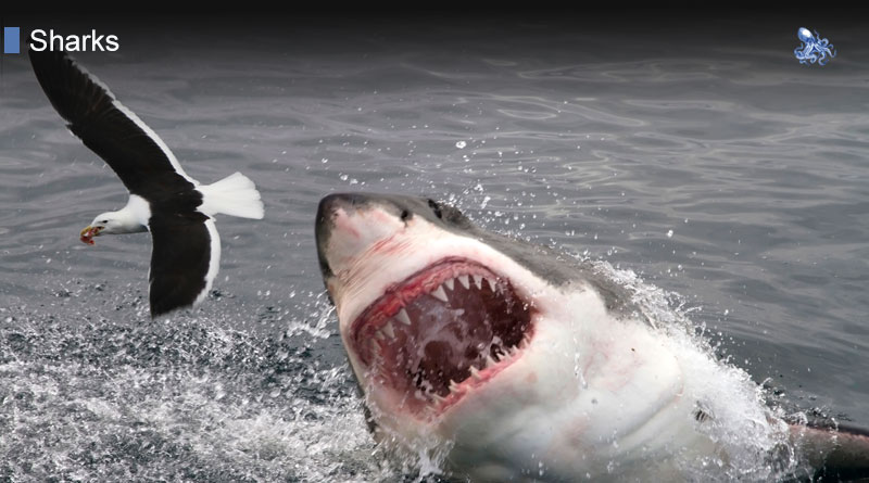Sharks Bite from Blane Peruns TheSea