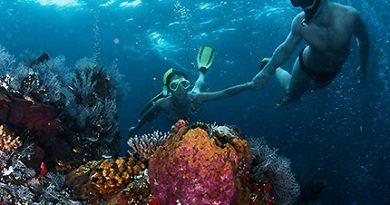 Snorkeling Basics