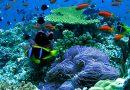 San Diego Snorkeling