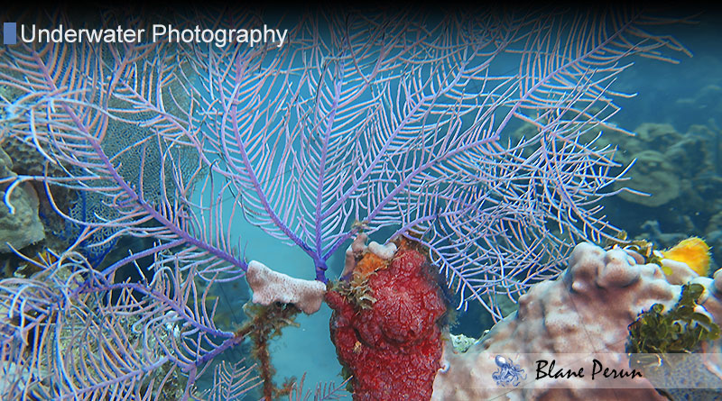 Underwater Photography from Blane Peruns TheSea
