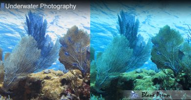 Underwater Photoshop Action Color Correction from Blane Peruns TheSea