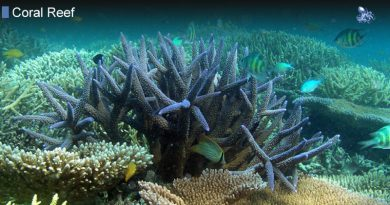 Ways To Conserve The Coral Reef