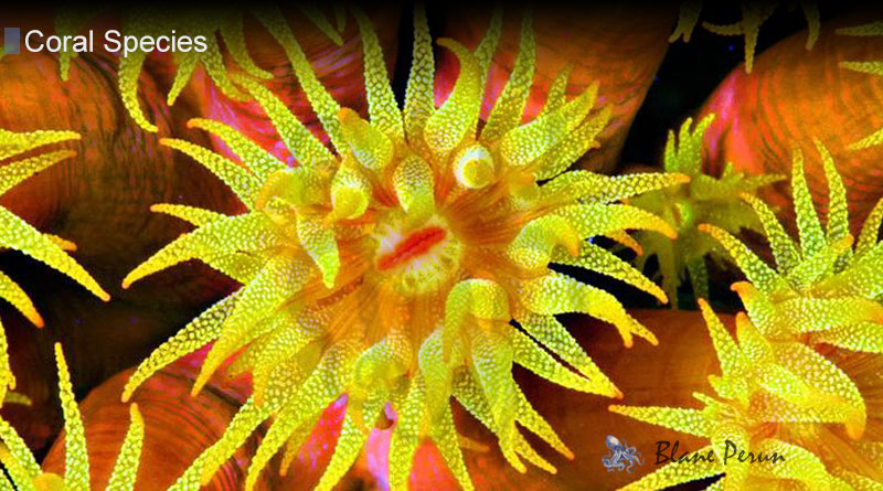 What Is The Purpose Of The Tentacles Of Coral from Blane Peruns TheSea.Org
