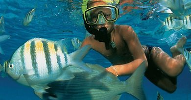 What You Should Look For in a Snorkel
