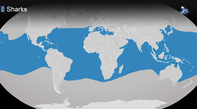 Where Do Sharks Live