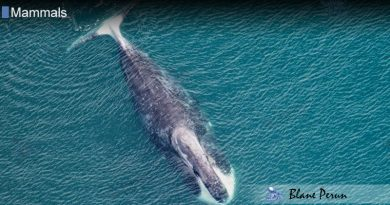 Which Whale Lives The Longest