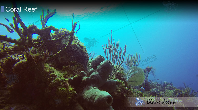 Why Are Coral Reefs Important from Blane Peruns TheSea