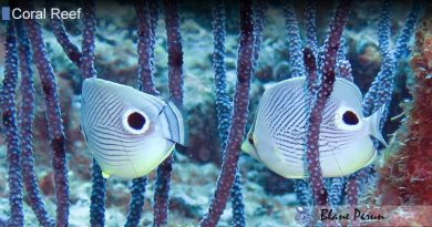 Why Are Coral Reefs Important In A Marine Ecosystem