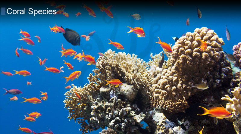 Why Is Coral An Animal from Blane Peruns TheSea.Org