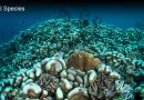Why Is Coral Bleaching A Problem