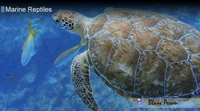 How Do Marine Reptiles Breathe From Blane Peruns TheSea.Org