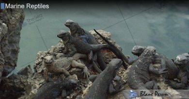 How Do Marine Reptiles Reproduce