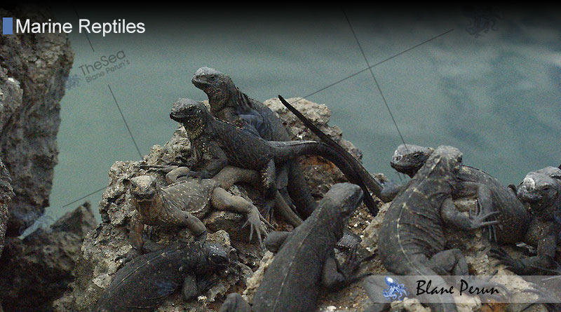 How Do Marine Reptiles Reproduce From Blane Peruns TheSea.Org