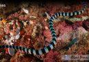How Do  Sea Snakes Breathe
