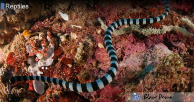 How Do They Breathe